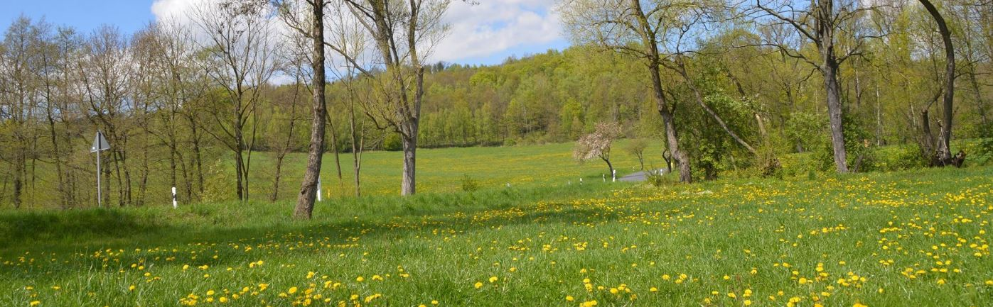 Website Hintergrund Frühling